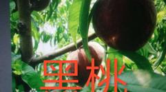 汝州市幸运种植合作社特色蔬菜系列(四)