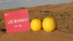 """不让""""密瓜君""""守着安静的沙漠""""一县一品""""带民勤蜜瓜"""