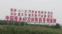 诚招大荔冬枣代理