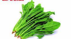 专供出口绿色无公害优质菠菜