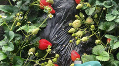 大量元素水溶肥加盟商能迅速补充营养