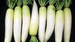 诺普琳萝卜冲施肥延长采摘期,防止作物早衰
