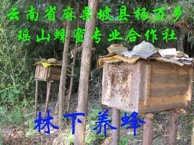 林下养蜂2.jpg