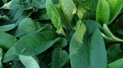 原生态绿色蔬菜