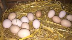 笨鸡蛋的销售