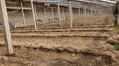 葡萄新品种培育基地