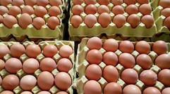 鸡蛋的生产