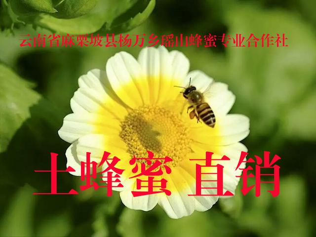 土蜂蜜直销.jpg