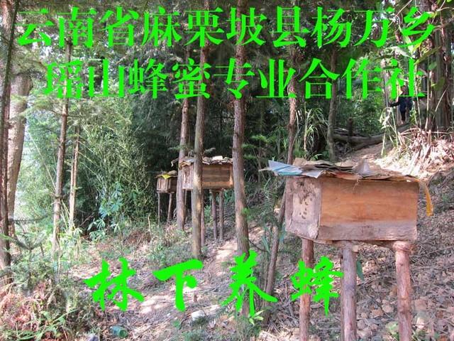林下养蜂1.jpg