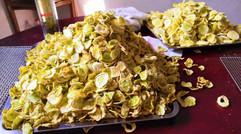 浒山农业烘干的鲜黄瓜