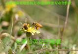 """秋吃天然蜂蜜不仅能""""润燥""""护心,还能助消化"""