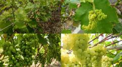 无公害,绿色、有机、富硒水果。