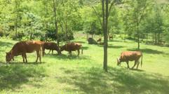 农民合作社生态养殖
