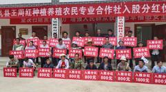 礼县王周红种植养殖农民专业合作社入股分红仪式