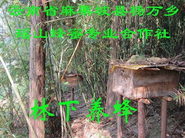 林下养蜂.jpg