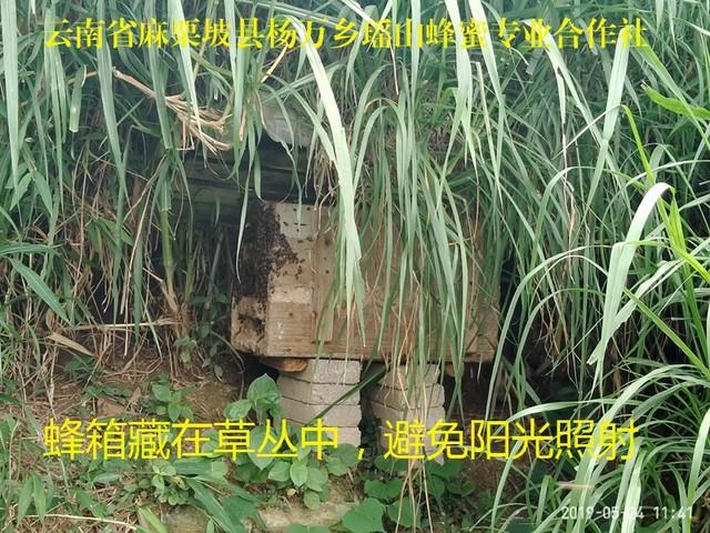 蜂箱藏在草丛中不免阳光照射.jpg