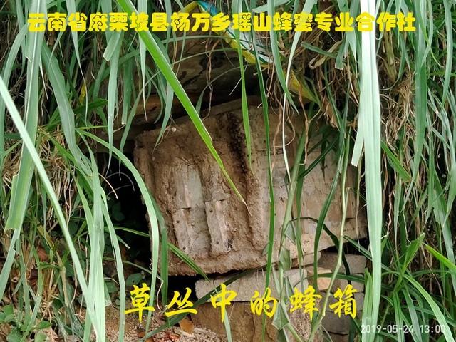 草丛中的蜂箱.jpg